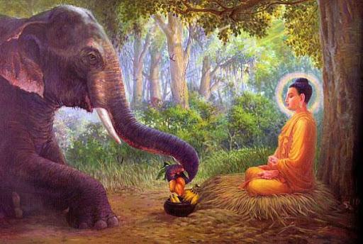 tranh voi va duc phat